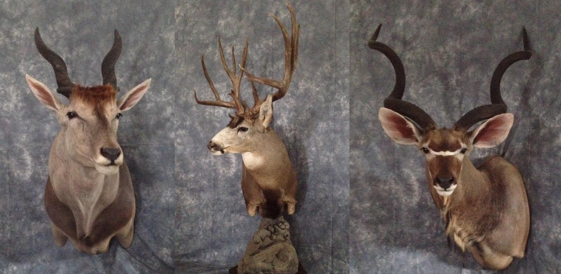 Imperial Taxidermy